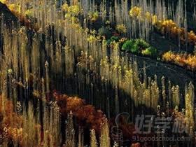 广州爱摄影作品展示