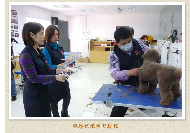 宠物美容师培训学校学费_广州好的宠物美容学校_宠物学校