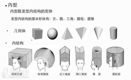 头发解剖层次结构图